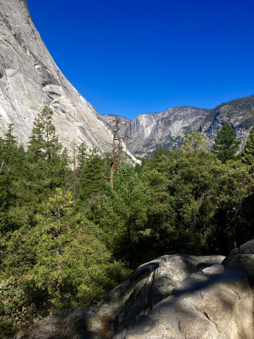 Vegan Yosemite Guide